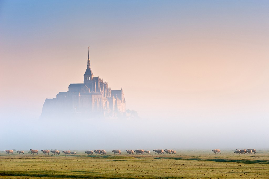 2013_baie_du_Mont_Saint_Michel_moutons_5975©M_Lerouge_CDT50