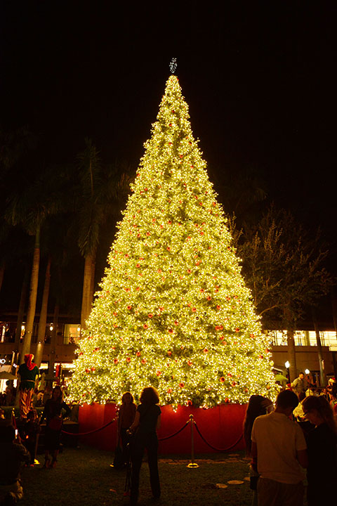 MSM Miami Shoot Magazine-Merrick Park Lighting Ceremony-Christmas Tree4