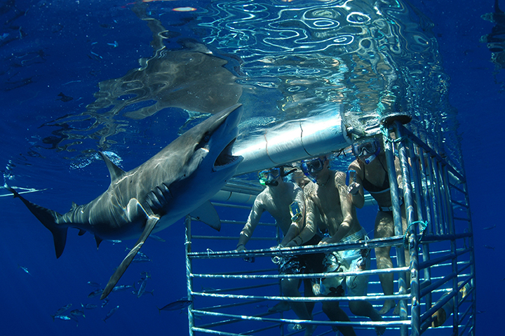 MSM Miami Shoot Magazine-Hawaii Shark Encounters-small
